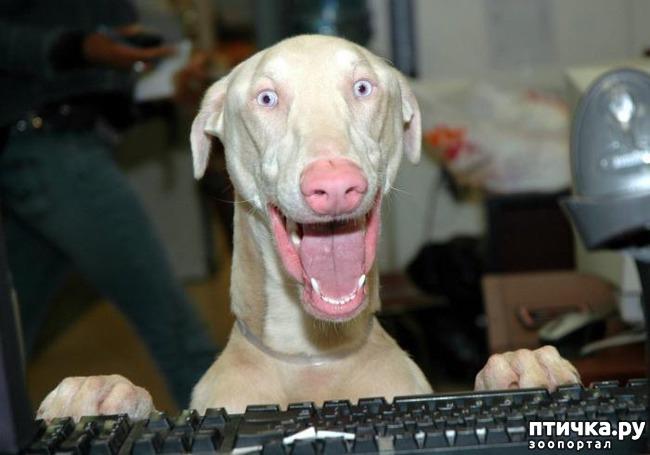 фото 9: Собаки-улыбаки