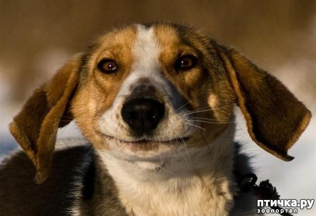 фото 12: Собаки-улыбаки