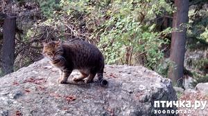 фото: Прогулка с кошками