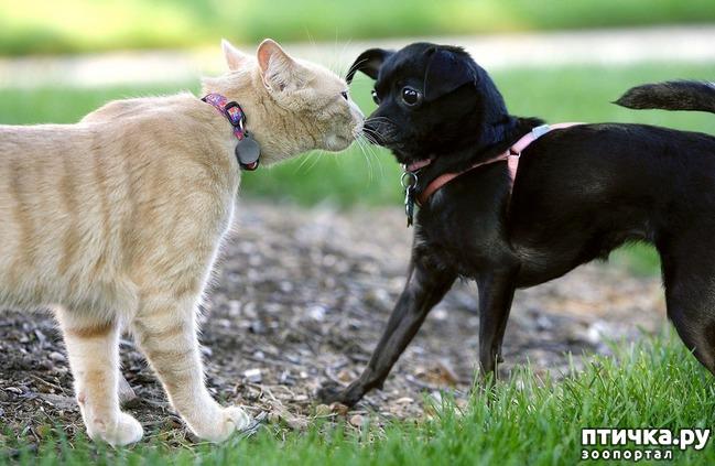 фото 3: Карлики в мире собак