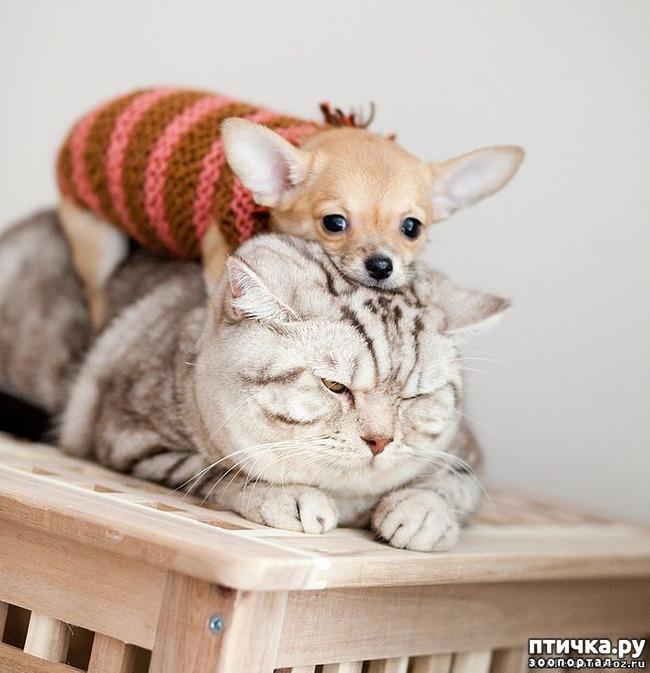фото 5: Карлики в мире собак