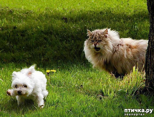 фото 6: Карлики в мире собак