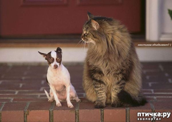 фото 7: Карлики в мире собак
