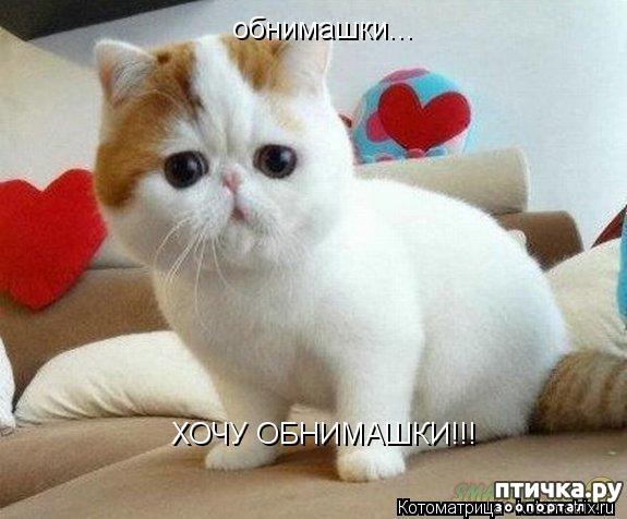 фото 1: Котоматрица: Котообнимашки!