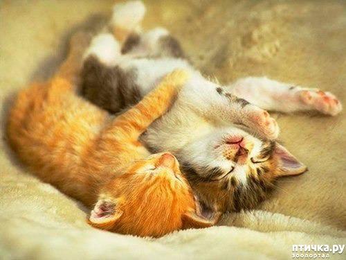фото 2: Котоматрица: Котообнимашки!