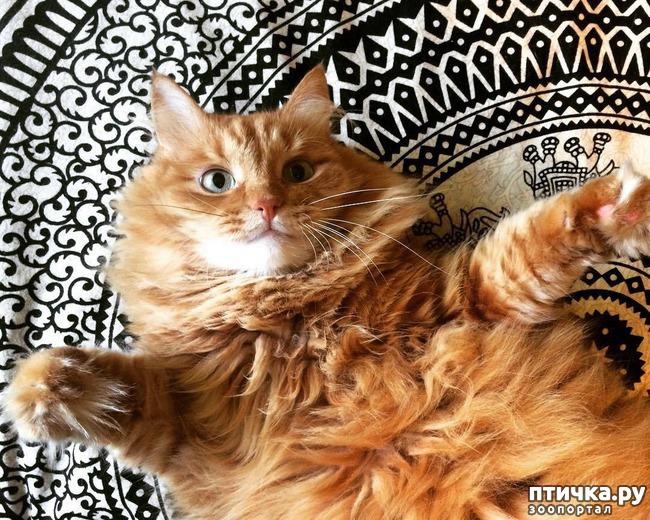 фото 3: Котоматрица: Котообнимашки!