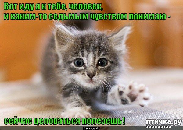 фото 4: Котоматрица: Котообнимашки!