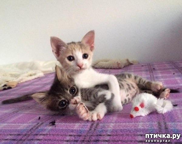 фото 6: Котоматрица: Котообнимашки!
