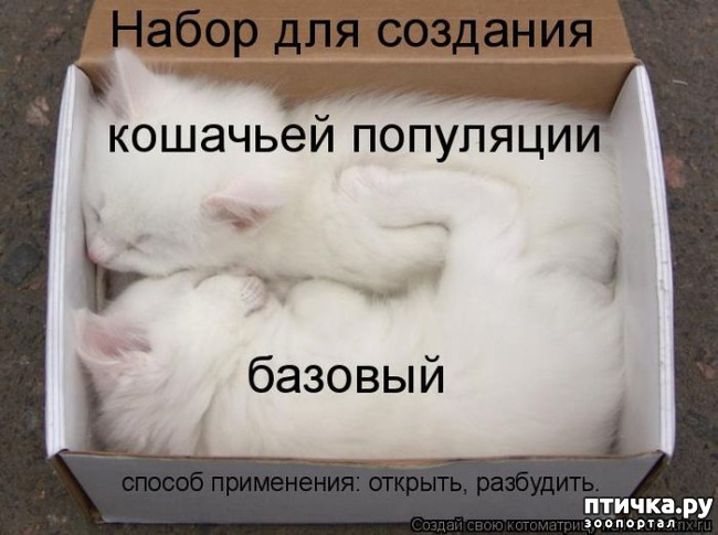 фото 9: Котоматрица: Котообнимашки!