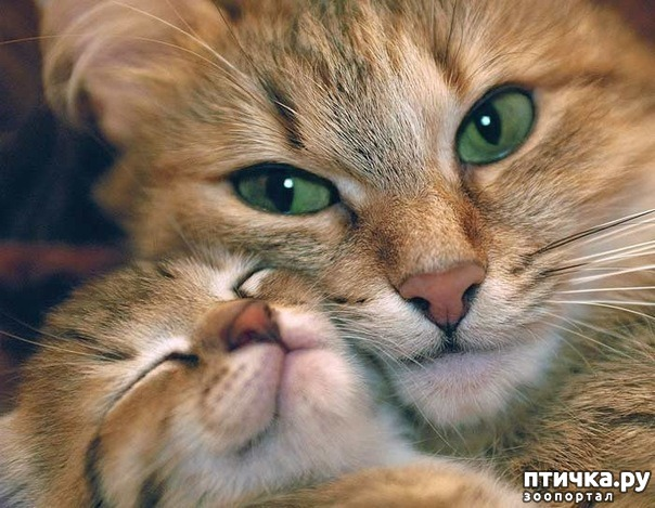 фото 10: Котоматрица: Котообнимашки!