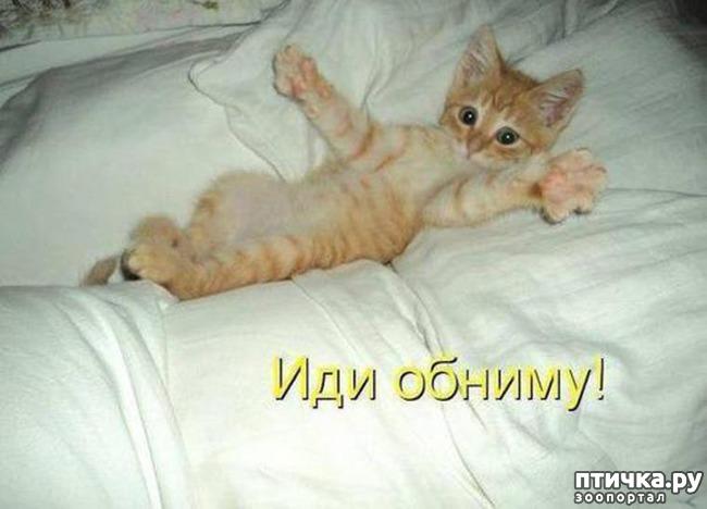 фото 14: Котоматрица: Котообнимашки!