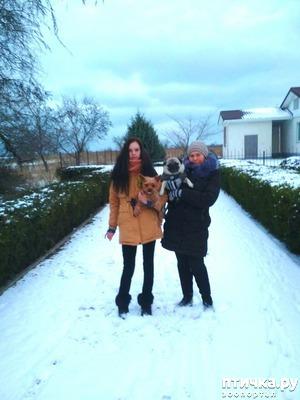 фото: Зимняя прогулка)