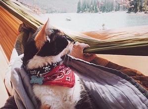 фото: Интересные факты о кошках. Кошки-путешественники.