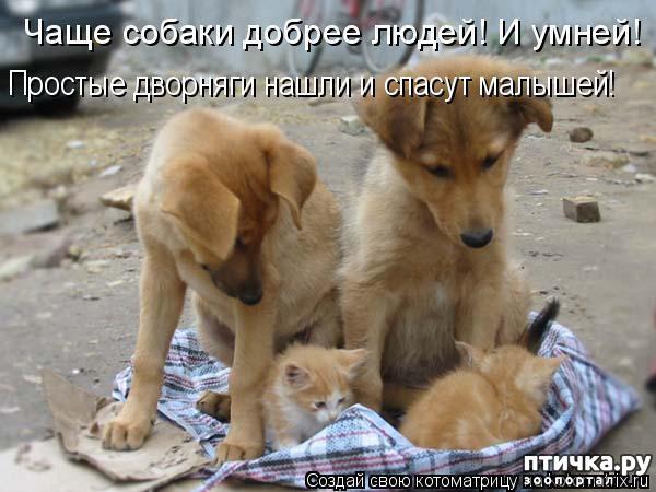 фото 2: Собакоматрица: Эти забавные щенки!