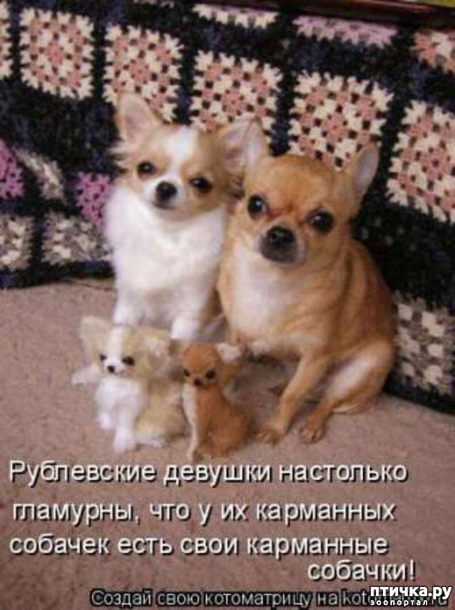 фото 3: Собакоматрица: Эти забавные щенки!