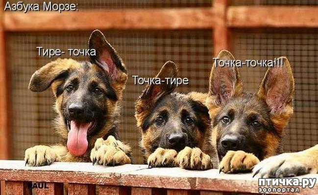 фото 4: Собакоматрица: Эти забавные щенки!