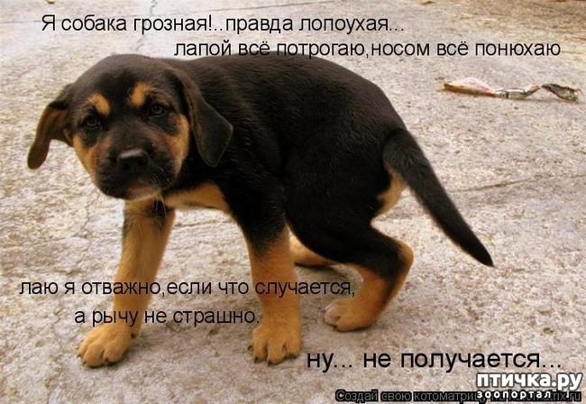 фото 5: Собакоматрица: Эти забавные щенки!