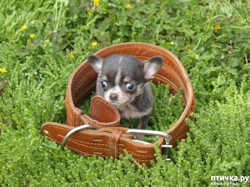 фото 6: Собакоматрица: Эти забавные щенки!