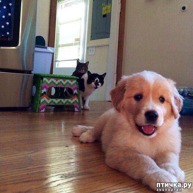 фото 8: Собакоматрица: Эти забавные щенки!