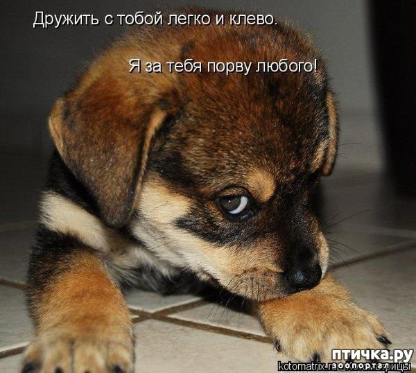 фото 9: Собакоматрица: Эти забавные щенки!