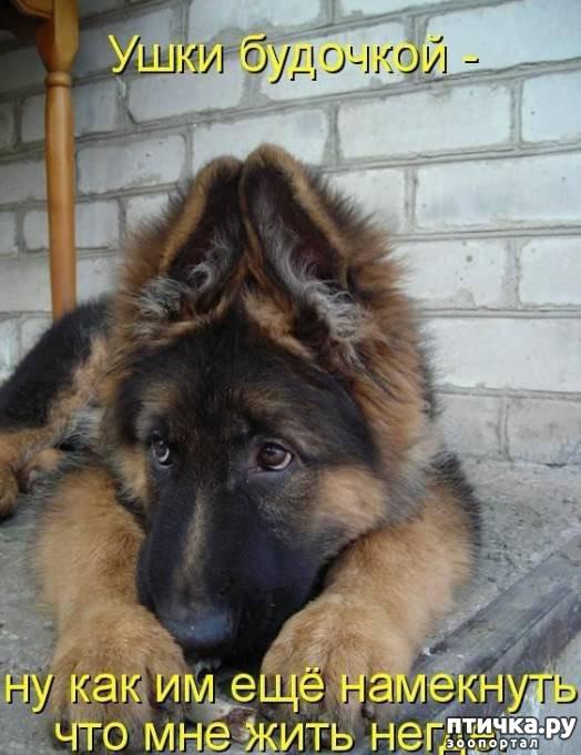 фото 10: Собакоматрица: Эти забавные щенки!