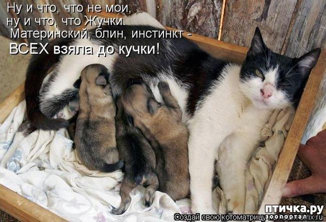 фото 11: Собакоматрица: Эти забавные щенки!