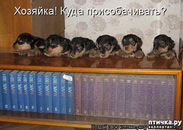фото 12: Собакоматрица: Эти забавные щенки!
