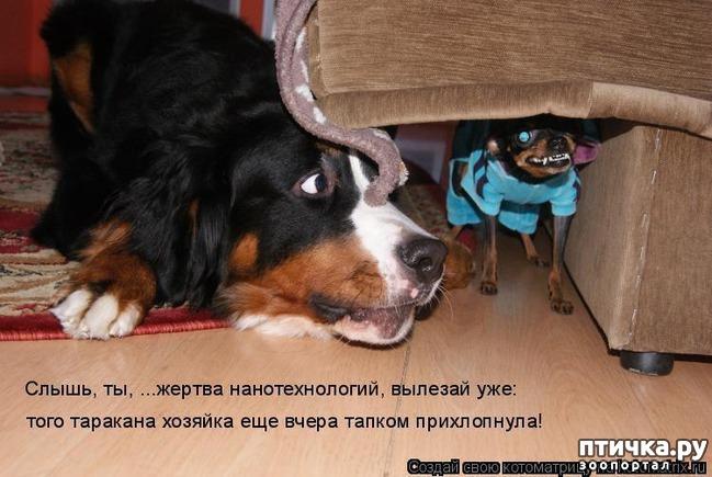 фото 13: Собакоматрица: Эти забавные щенки!