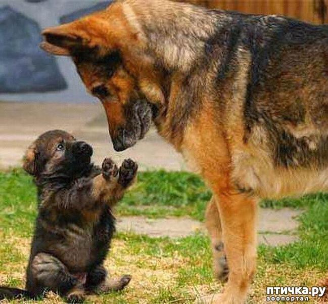 фото 15: Собакоматрица: Эти забавные щенки!