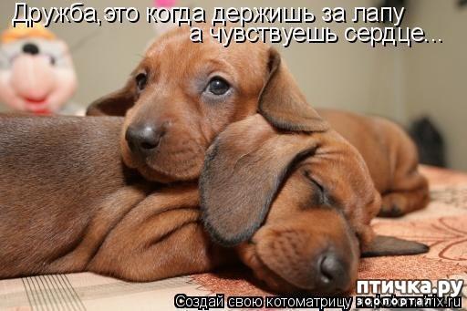 фото 16: Собакоматрица: Эти забавные щенки!