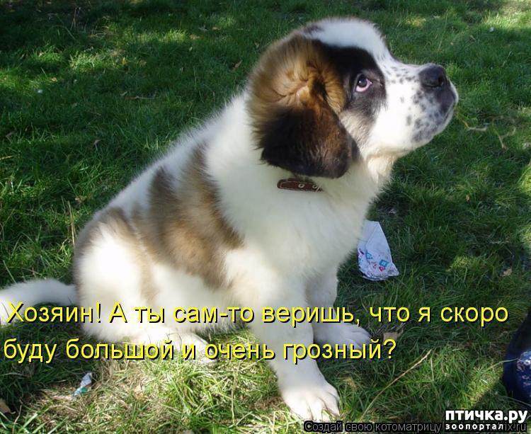 Собаки фото с надписями