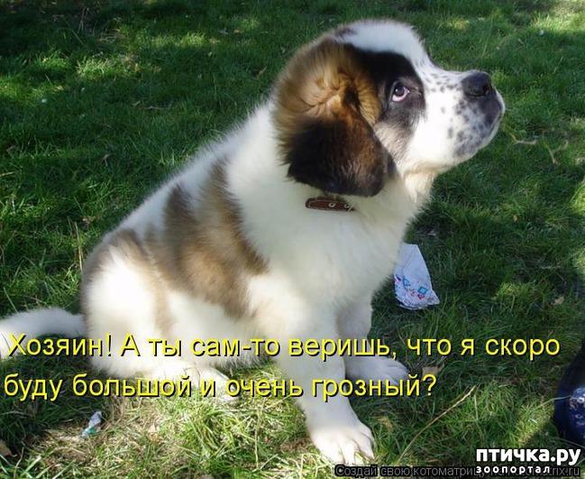фото 17: Собакоматрица: Эти забавные щенки!