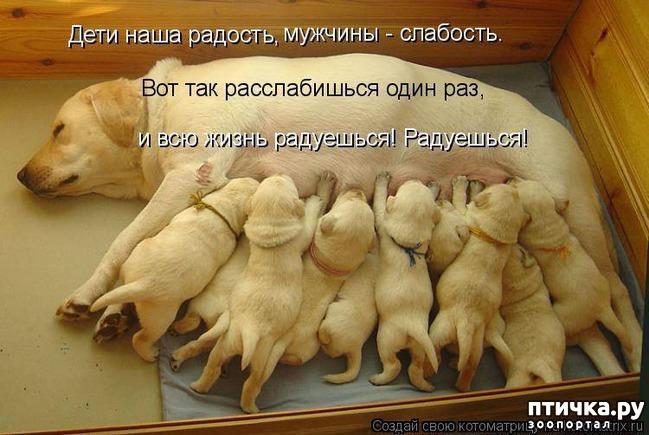 фото 18: Собакоматрица: Эти забавные щенки!