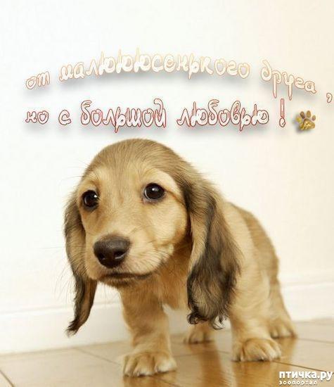 фото 19: Собакоматрица: Эти забавные щенки!