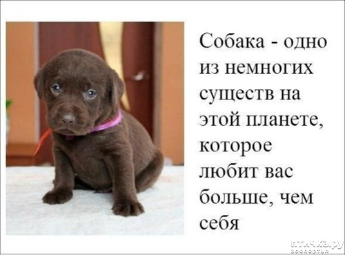 фото 20: Собакоматрица: Эти забавные щенки!