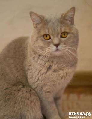 фото 3: Как и где лучше спаривать кошку