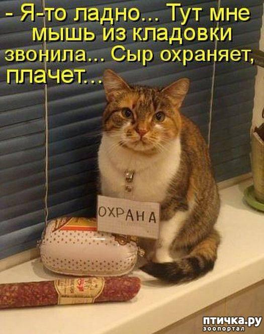 Картинки с приколами про кошек и мышей, для подруги