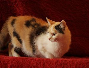 фото: Как и где лучше спаривать кошку