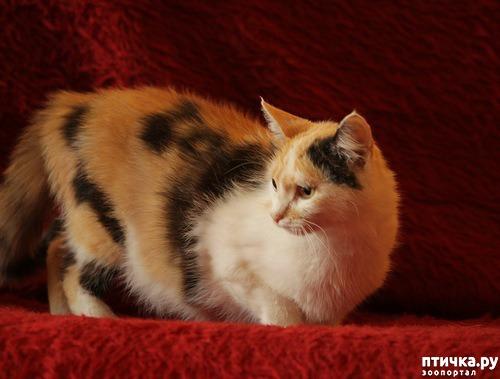 фото 1: Как и где лучше спаривать кошку