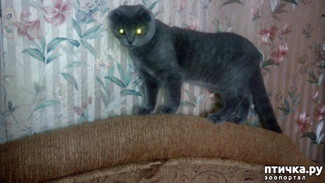 фото 2: Как и где лучше спаривать кошку