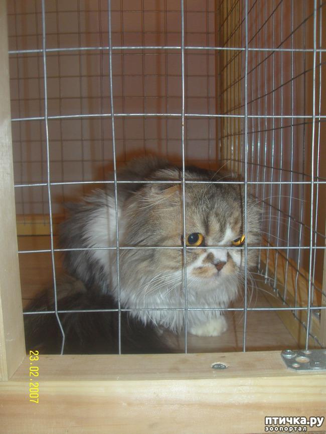 фото 1: Выставка породистых кошек. 27.01.2018г. Саратов.