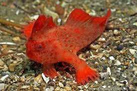 фото: У Тасмании нашли редкую рыбу с «руками»