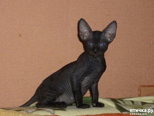 фото 8: Самые-самые 6 или самые черные