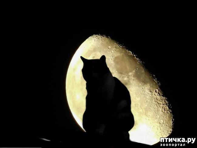 фото 1: Лунное затмение и животные
