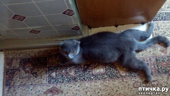 фото 3: Как вести себя с беременной кошкой
