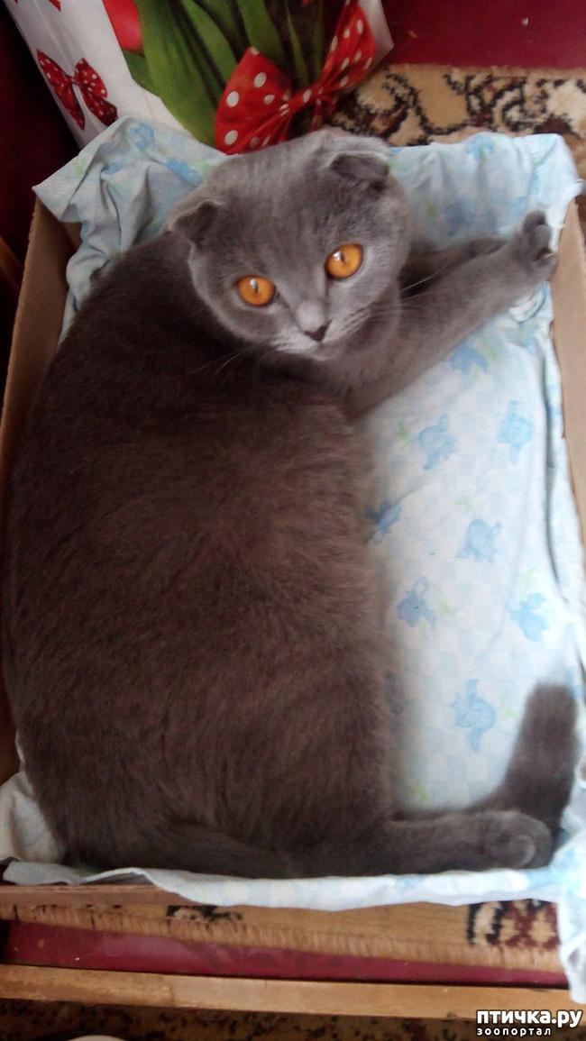 фото 5: Как вести себя с беременной кошкой