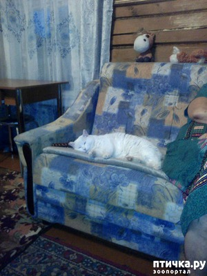 фото: Кошки и гости в доме.
