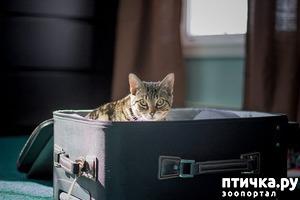 фото: С кем оставить животное на время отъезда