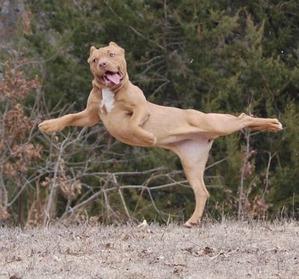 фото: У животных тоже бывают фотографии, которые они захотели бы срочно удалить