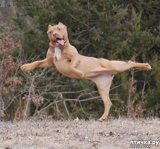 фото 1: У животных тоже бывают фотографии, которые они захотели бы срочно удалить
